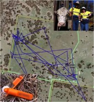CSIRO Smart Farming Report - Wireless livestock tracking using Taggle ear tags (Image courtesy of AgTrix P/L website; Inset image courtesy of Mark Trotter, UNE Precision Agriculture Research Group)